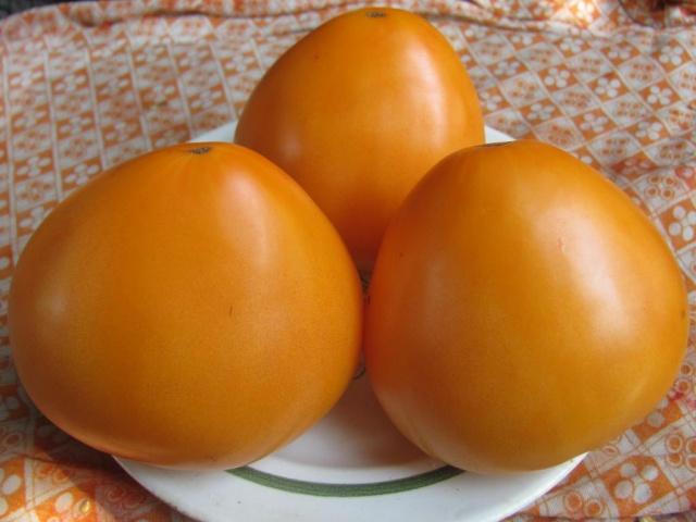 tomato golden domes