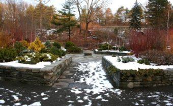 garden in February