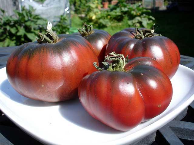 tomato carbon