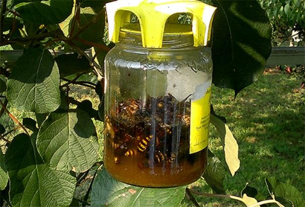 ловушка от насекомите