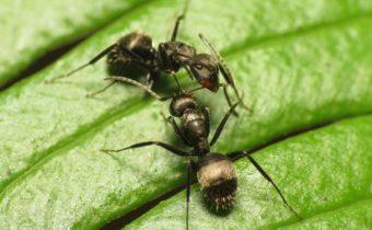 ants on the plot
