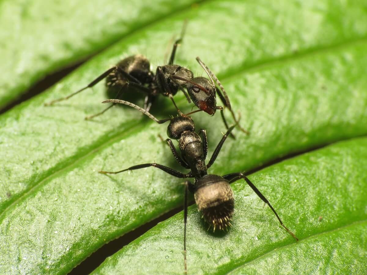 les fourmis sur la parcelle