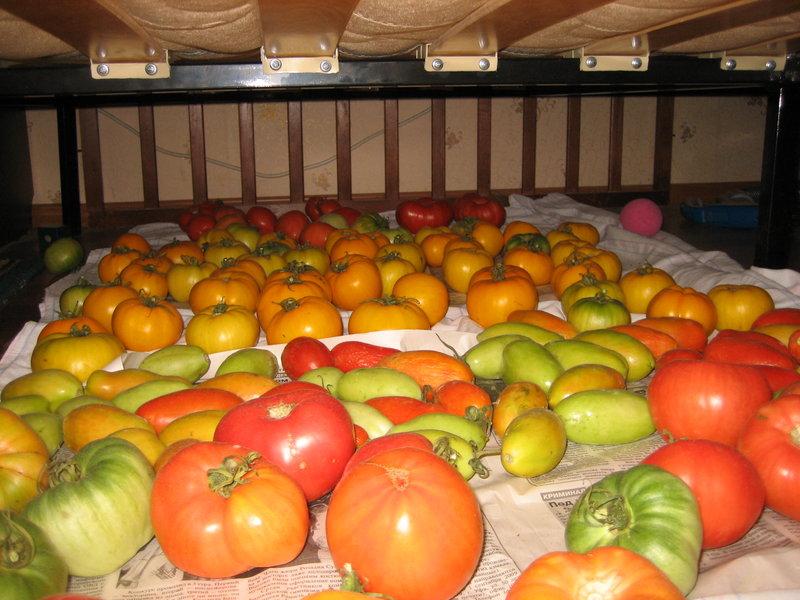 съхранение на домати