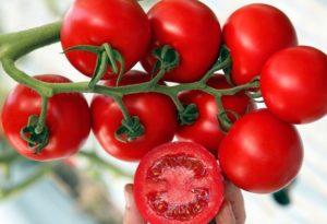 сортове домати 2019