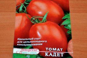 кадетски доматен сорт