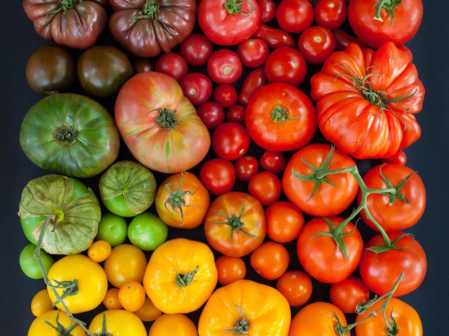 Tomatoes sorta