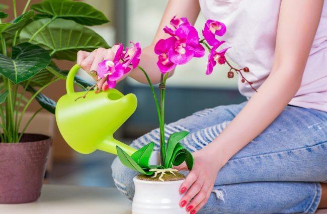 Peroxyde d'hydrogène pour orchidée