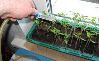 Engrais à partir de bouillon de pomme de terre pour les semis