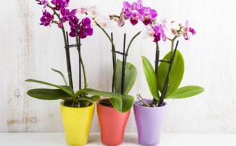 Oxyde d'hydrogène et orchidée