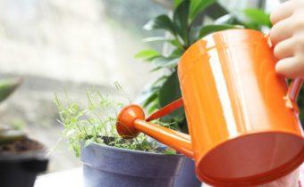 How to Reanimate Indoor Aspirin Flowers