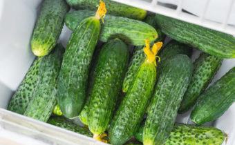Saving Cucumbers