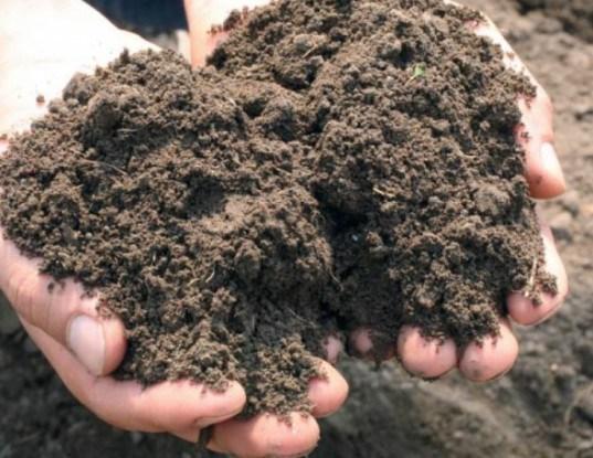 acidité du sol