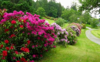 Frost-resistant flowering shrubs