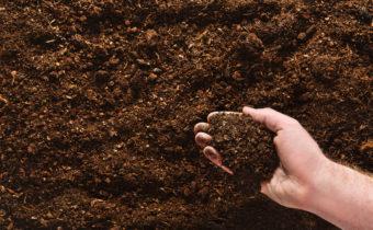 плодородна почва