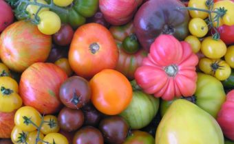 Unusual Tomato Varieties