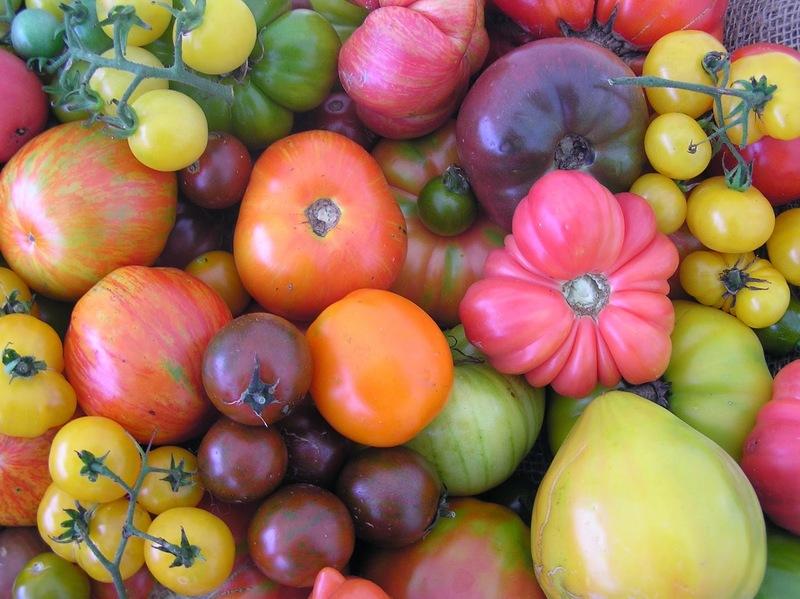 זני עגבניות לא רגילים