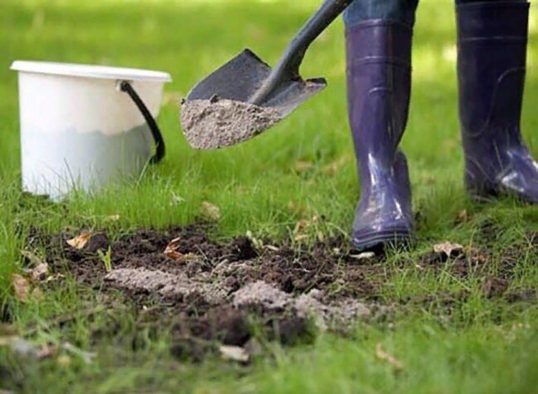 Proprietà Cenere Di Legna la cenere come fertilizzante in autunno: come applicare alle