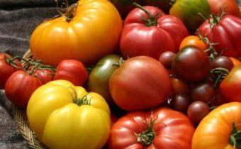 сорта-sladkih-tomatov