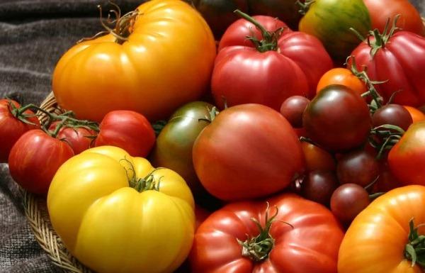 sorta-sladkih-tomatov